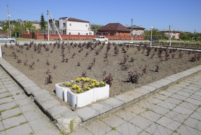 Camas de flor cerca de la casa de la cultura cerca del cuadrado central en el acuerdo de Oktyabrsky fotografía de archivo libre de regalías
