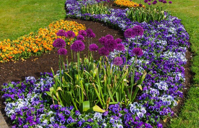 Camas de flor coloridos dos pansies e das outras flores no parque da cidade foto de stock