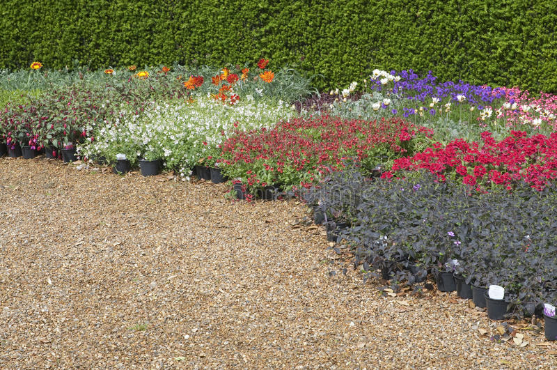 Camas de flor inglesas no jardim foto de stock royalty free