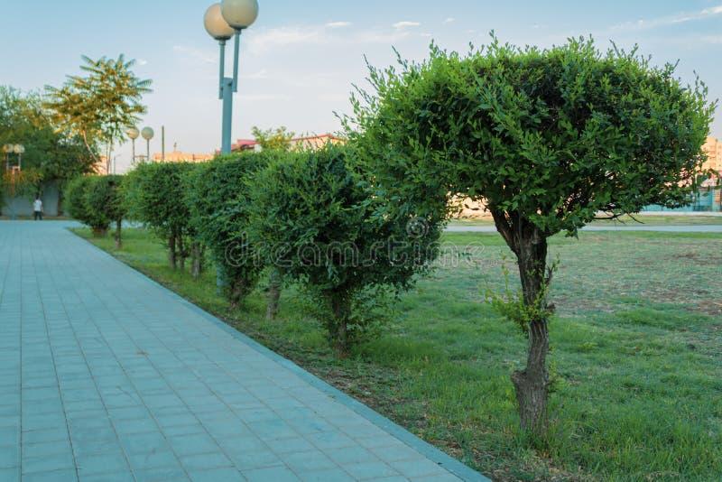 Camas de flor verdes a lo largo del camino en el parque Pequeños árboles y arbustos bien arreglados y arreglados Visión baja infe foto de archivo libre de regalías