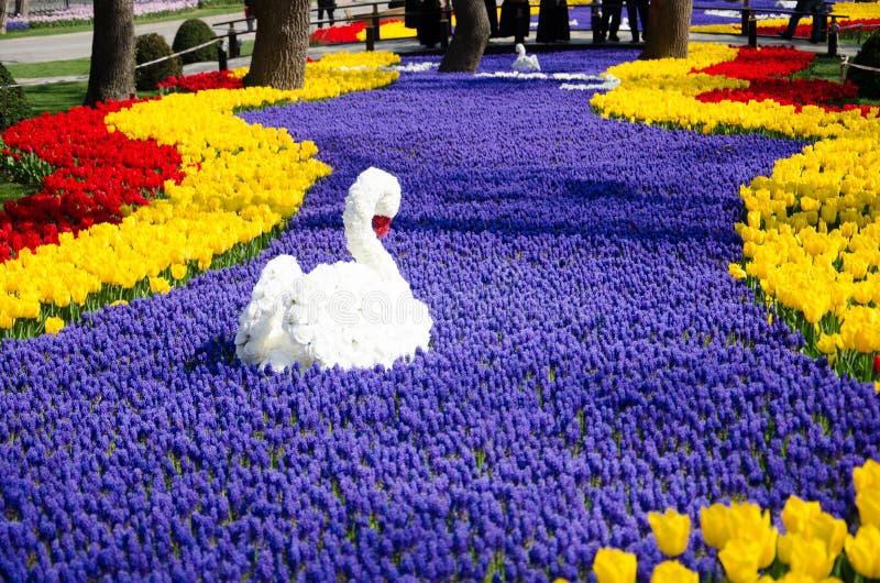 Camas de tulipán en el parque foto de archivo libre de regalías