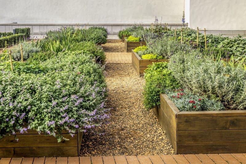 Camas invadidas em especiarias e em vegetais crescentes das ervas das plantas de um jardim urbano imagens de stock