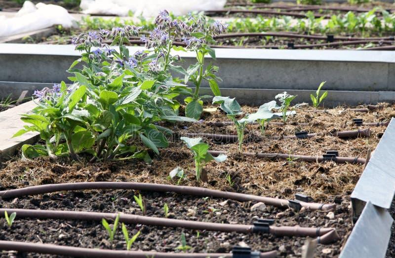 Camas vegetales en primavera temprana imágenes de archivo libres de regalías