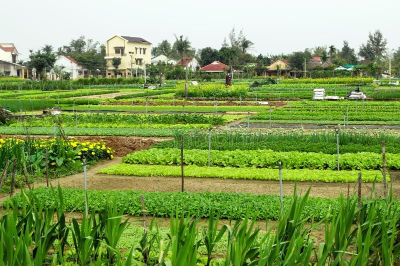 Camas verdes del jardín con las verduras, las frutas y las flores en una granja con las casas en un fondo foto de archivo