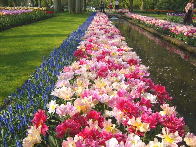 Camas y charca de tulipán imagen de archivo