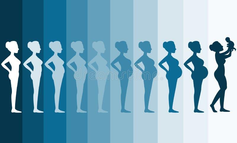Cambiamenti nel corpo di una donna nella gravidanza, fasi di gravidanza della siluetta, illustrazioni di vettore illustrazione vettoriale