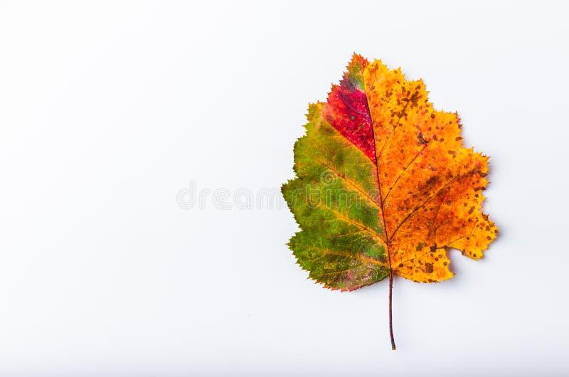 Cambio colorido de la estación del otoño del verano de la pendiente del color del arco iris de la hoja del otoño imagenes de archivo