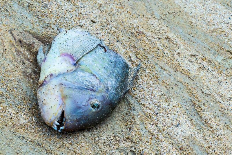 Cambio de la muerte de la temperatura del cambio del océano del tiempo de la catástrofe ecológica de los pescados, dientes peligr imágenes de archivo libres de regalías
