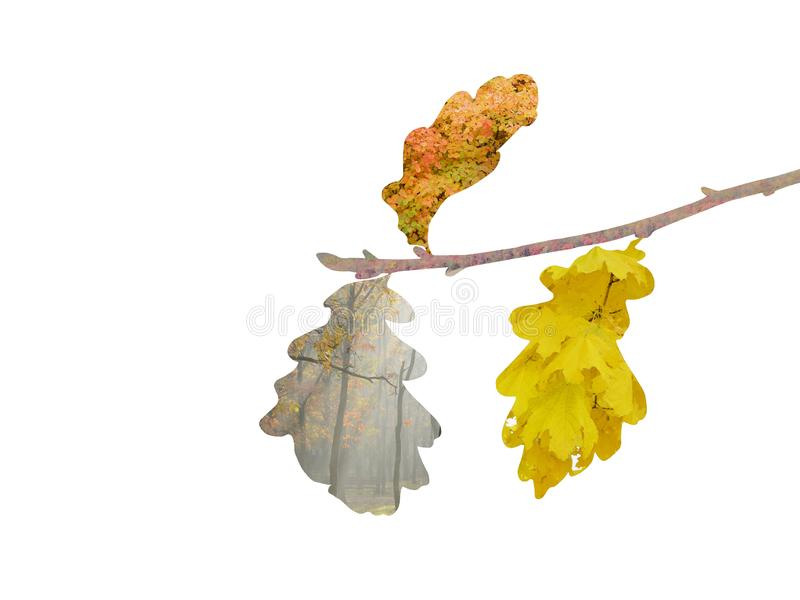 Cambio del otoño del color de la hoja libre illustration