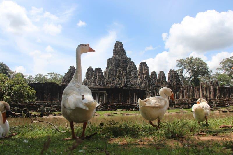 cambodia Angkor Thom City bayon cambodia nära riepsiemtempelet Siem Reap landskap Siem Reap stad royaltyfri fotografi