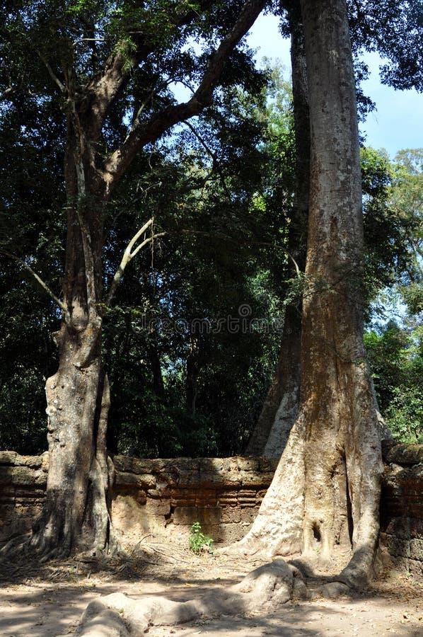 Cambodia - Detail of Ta Prohm temple stock image