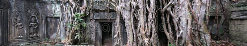 cambodia prohm ta świątynia zdjęcie stock