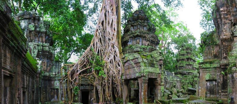 cambodia prohm ta świątynia zdjęcie royalty free