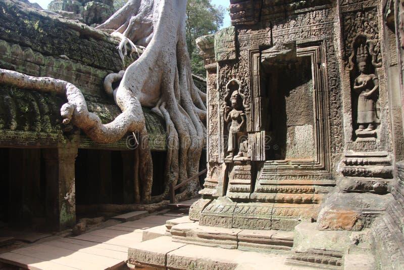 cambodia Temple de Ta Prohm Province de Siem Reap Ville de Siem Reap photographie stock libre de droits
