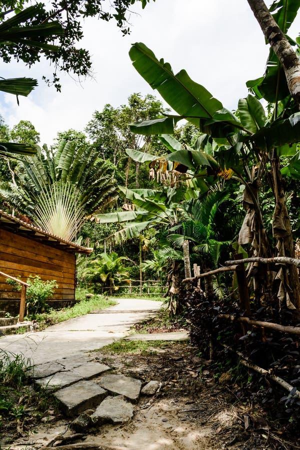 cambodia Una vista un percorso che conduce le palme passate della banana fotografia stock libera da diritti