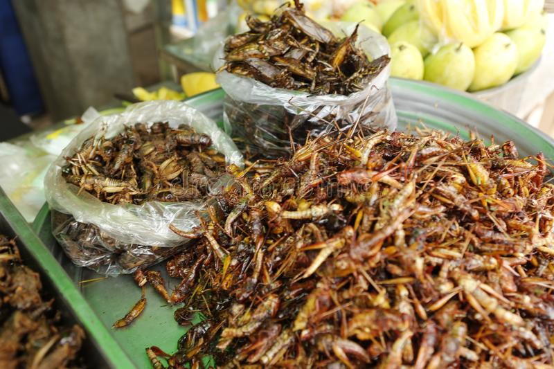 Food insect Cambodia. Cambodians and more generally South eastern Asians are enjoying insects crickets, cockroaches, worms, etc. as food. They consume them dried royalty free stock image