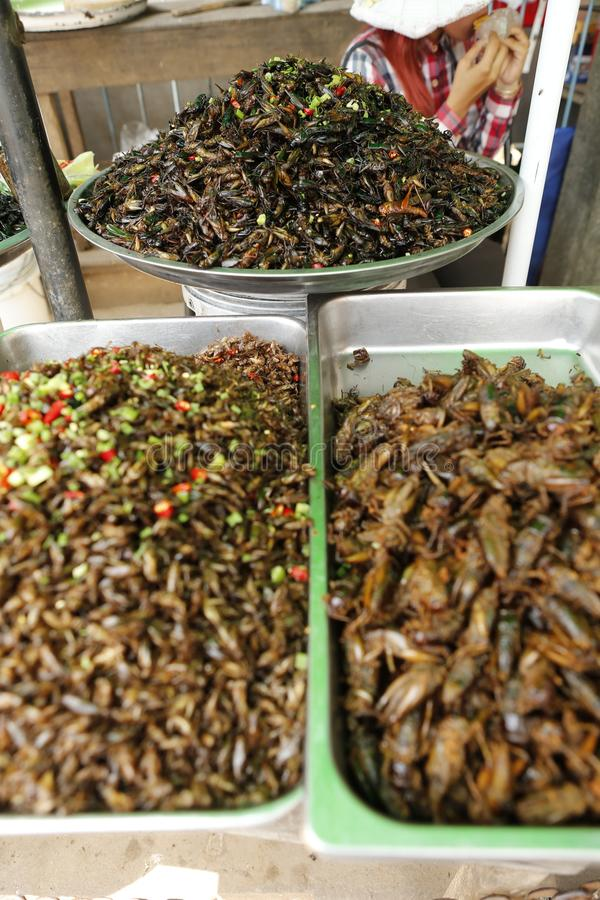 Food insect Cambodia. Cambodians and more generally South eastern Asians are enjoying insects crickets, cockroaches, worms, etc. as food. They consume them dried stock image