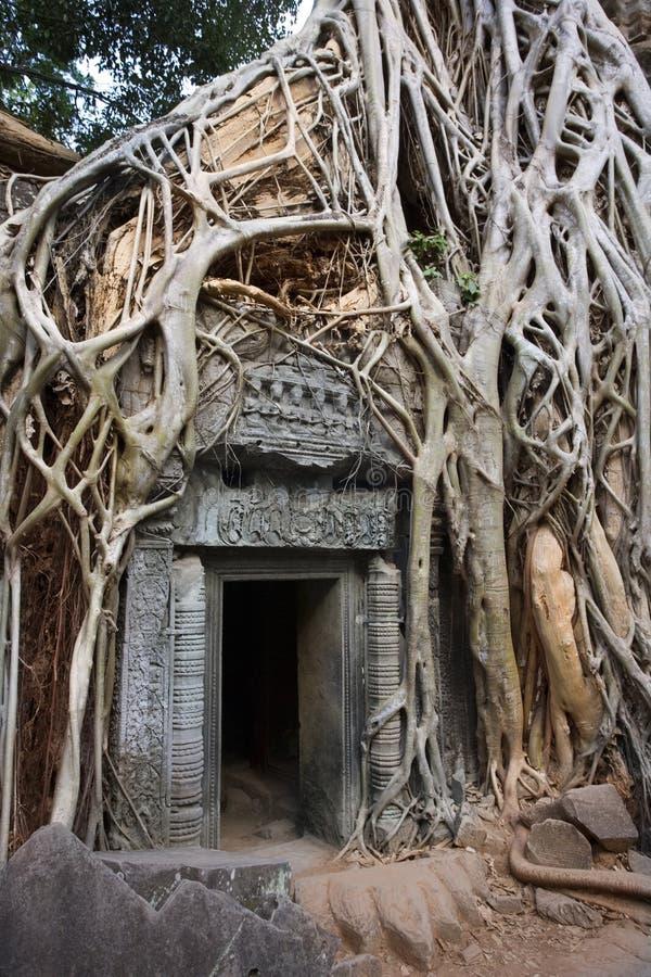 Cambodja - tempelet för Ta Prohm fördärvar i Angkor Wat   fotografering för bildbyråer