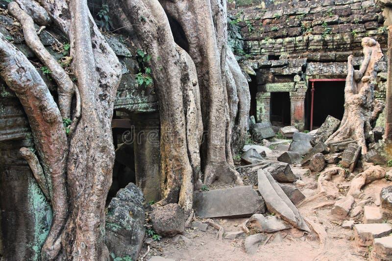Camboya - TA Prohm fotos de archivo libres de regalías