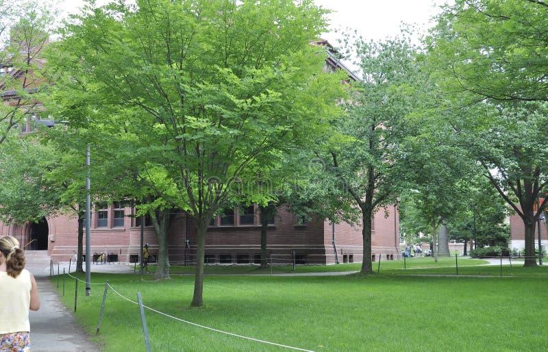 Cambridge mA, el 30 de junio: Yarda del campus de Harvard en el estado de Cambridge Massachusettes de los E.E.U.U. imagen de archivo
