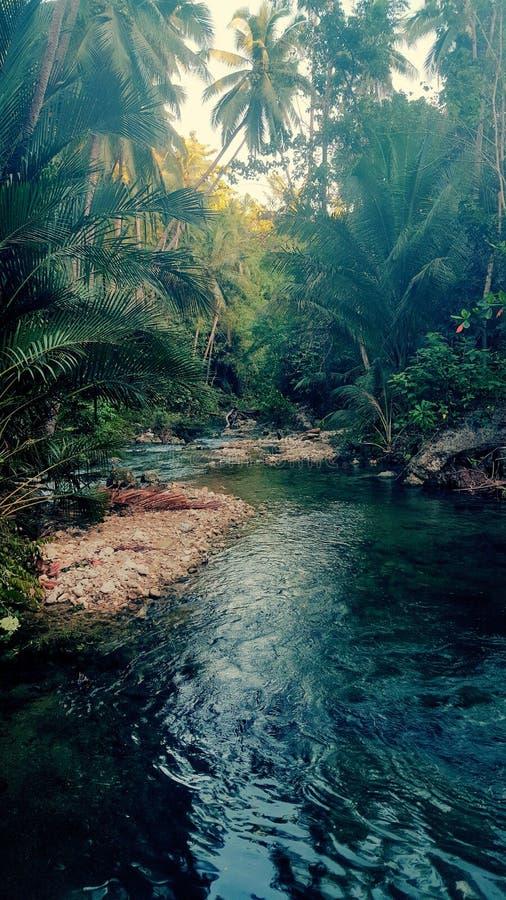 Cambugahay flod royaltyfri fotografi