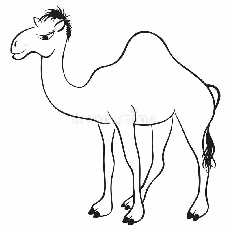 Download Camel stock vector. Image of image, footprint, leisure - 18645163