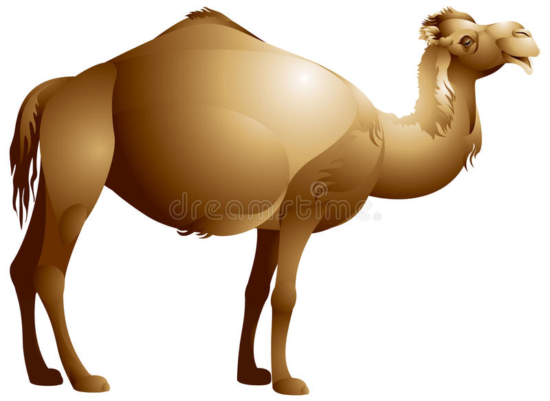 Download Camel stock vector. Image of desert, dromedary, camel - 26813221