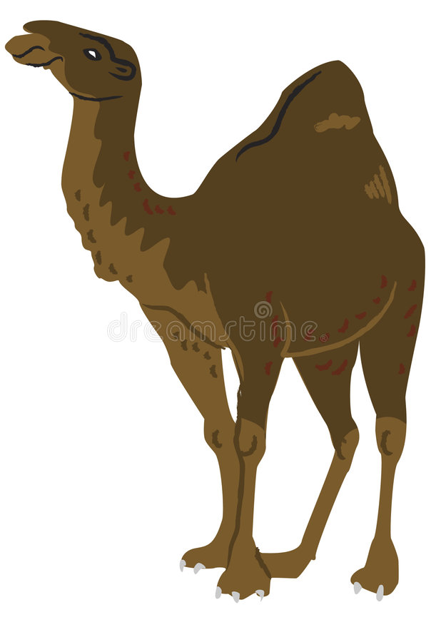 Camel stock illustration