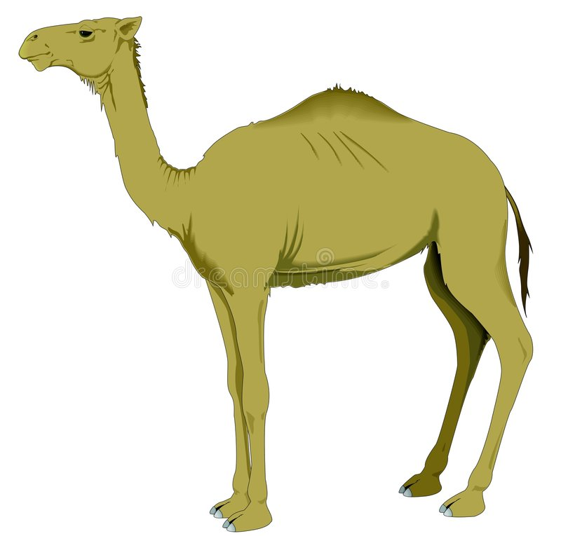 Download Camel stock vector. Illustration of mammal, bushy, nasi - 8199771