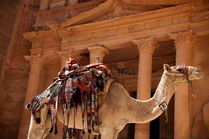 Camel against treasury stock photo
