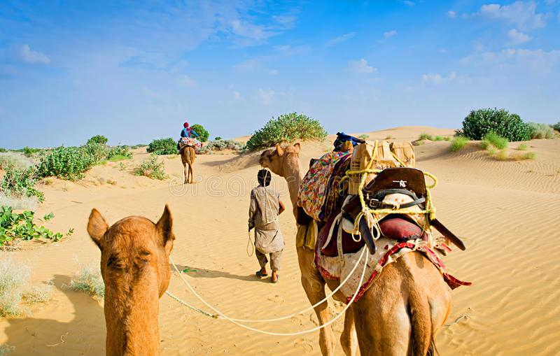 Camel caravan going through the sand dunes in desert, Rajasthan, India royalty free stock images