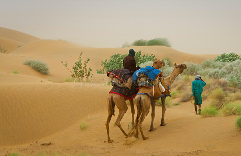 Camel caravan going through the sand dunes in desert, Rajasthan, India royalty free stock photos