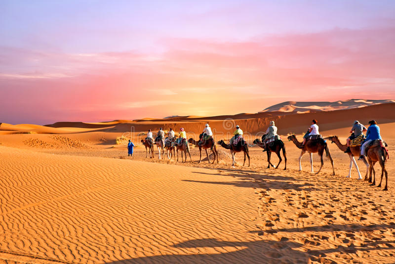 Camel caravan going through the sand dunes in the Sahara Desert, Morocco at sunset royalty free stock photos