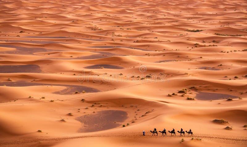 Camel Caravan in Sahara Desert stock image