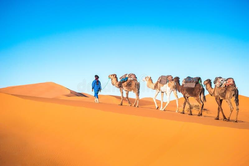 Camel caravan on the Sahara stock photos