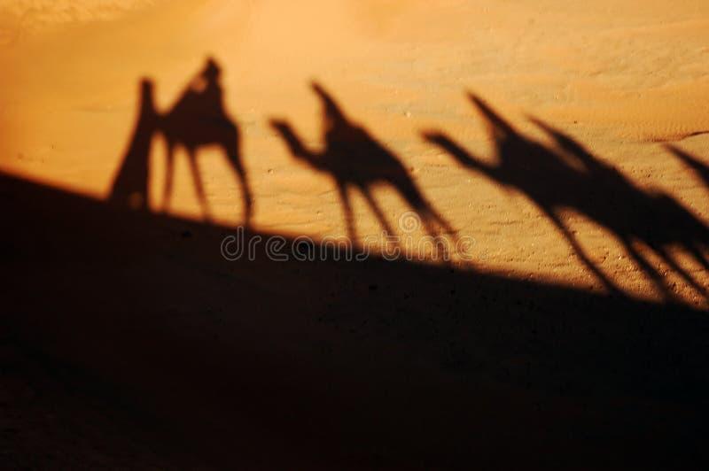 Camel Caravan Shadows Stock Photography
