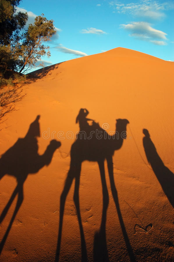 Download Camel caravan shadows stock photo. Image of morning, desert - 13739970