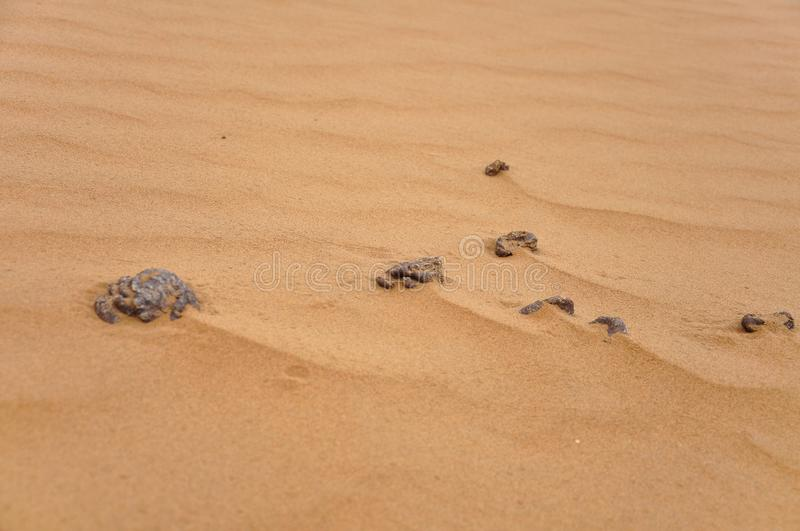 Camel dung in Desert. Background royalty free stock images