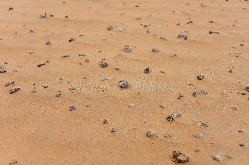 Camel dung in Desert. Background stock photo