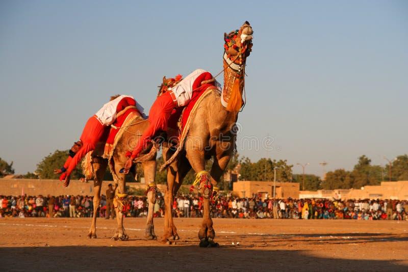 Camel festival royalty free stock photo