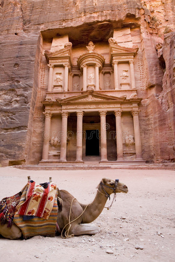 Camel in front of Treasury Petra Jordan. One of the seven new wonders of the world stock images