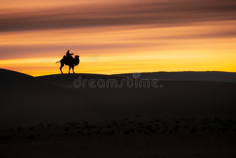 Camel going through the sand dunes on sunrise, Gobi desert Mongolia.  royalty free stock photography