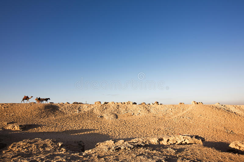 Camel and a horsecart on a rocky desert stock photography