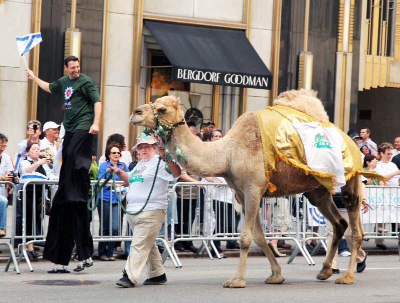 Camel on israel parade. royalty free stock photo