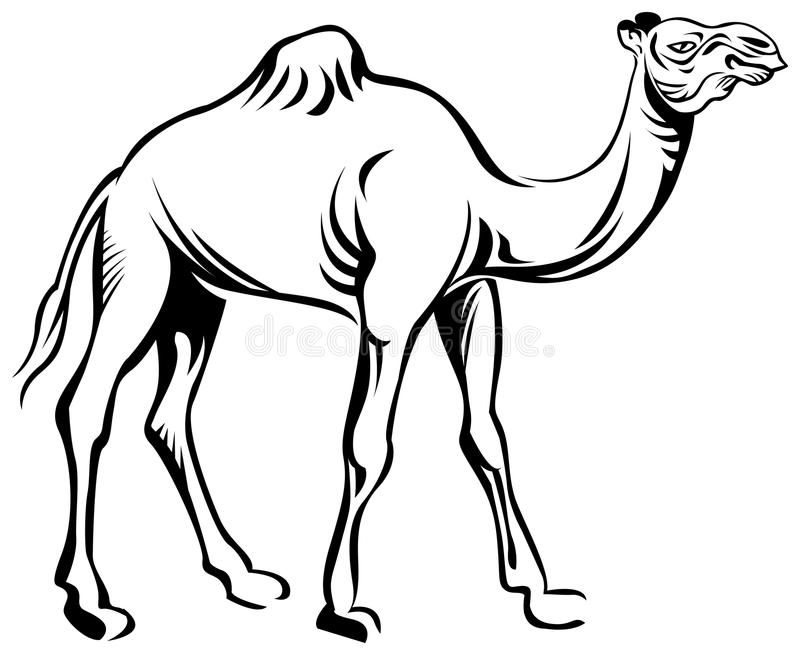 camel stock vector illustration of livestock black 46239004 rh dreamstime com livestock clip art free livestock auction clipart