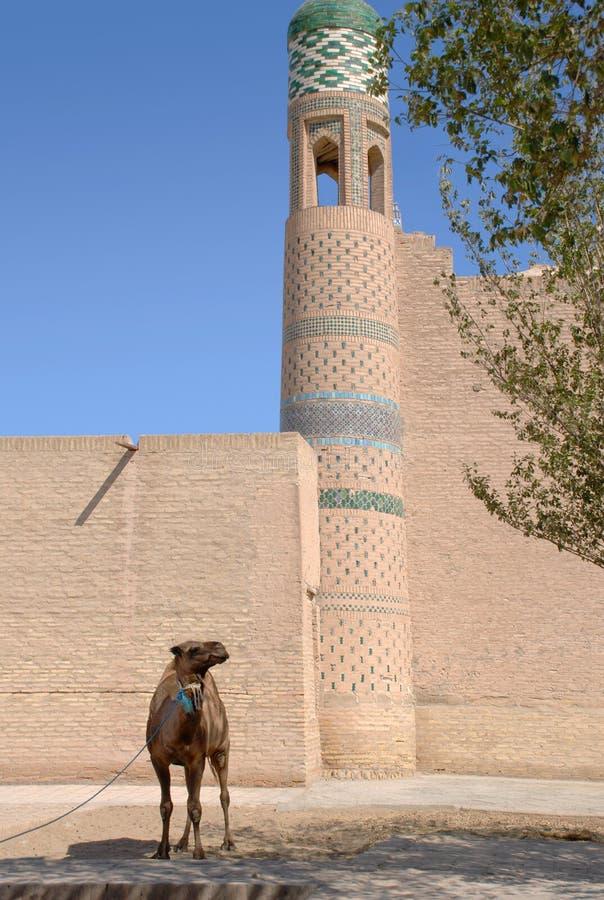 Camel near the ancient tower in Ichan-Kala stock photos