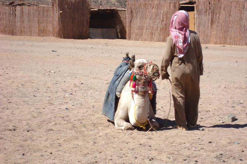 Camel with the owner in an Egyptian village. royalty free stock photography