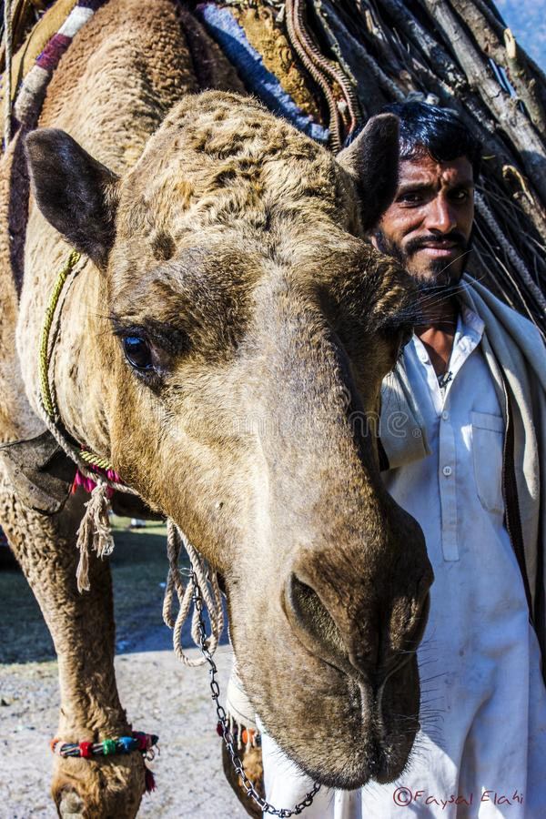 A camel with the owner royalty free stock photos