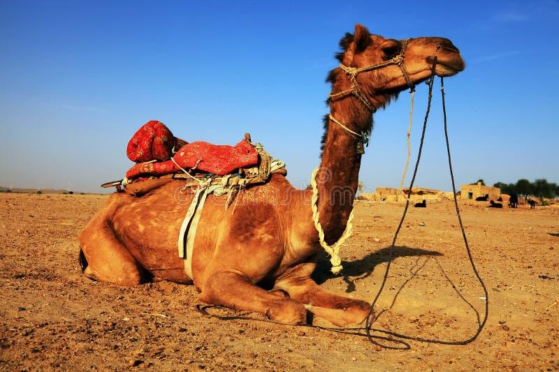Download Camel Portrait Royalty Free Stock Images - Image: 24545819