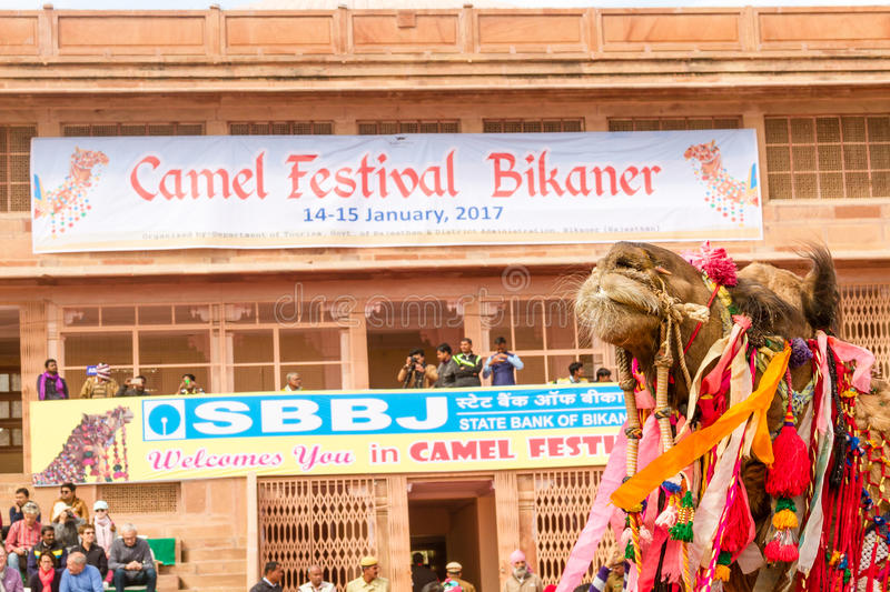 Camel procession royalty free stock photo